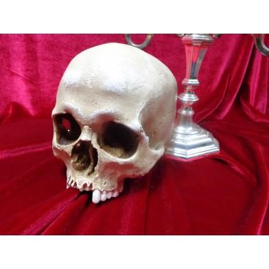 Модель человеческого черепа из керамики № 1